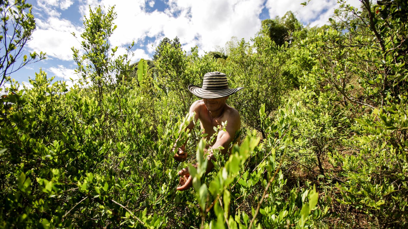 Jóvenes campesinos, los más afectados por cultivos de coca