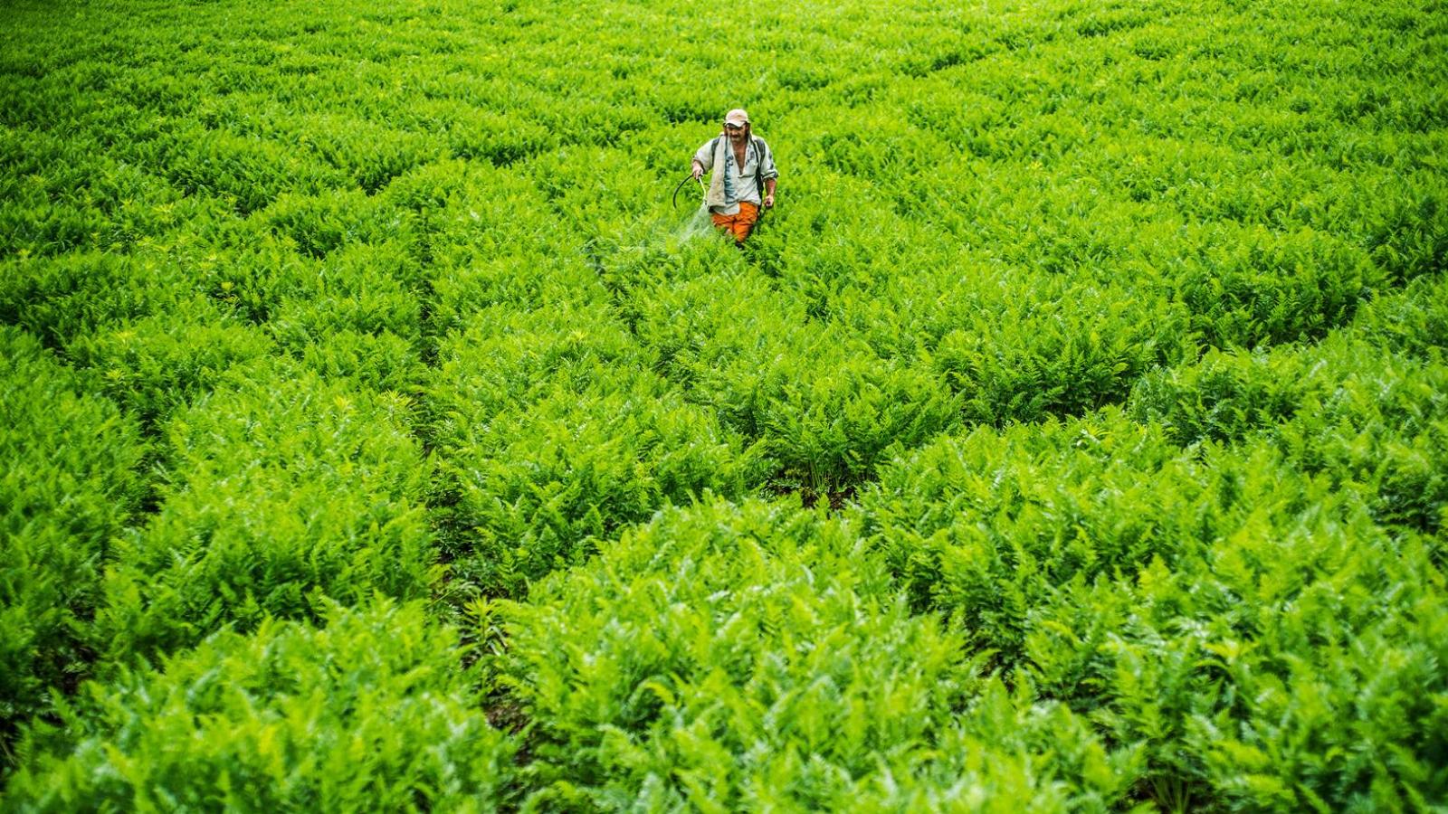 los-seguros-agropecuarios-son-una-medida-a-disposicion-de-los-campesinos-en-colombia-para-reducir-los-danos-que-dejan-eventos-climaticos-como-las-heladas