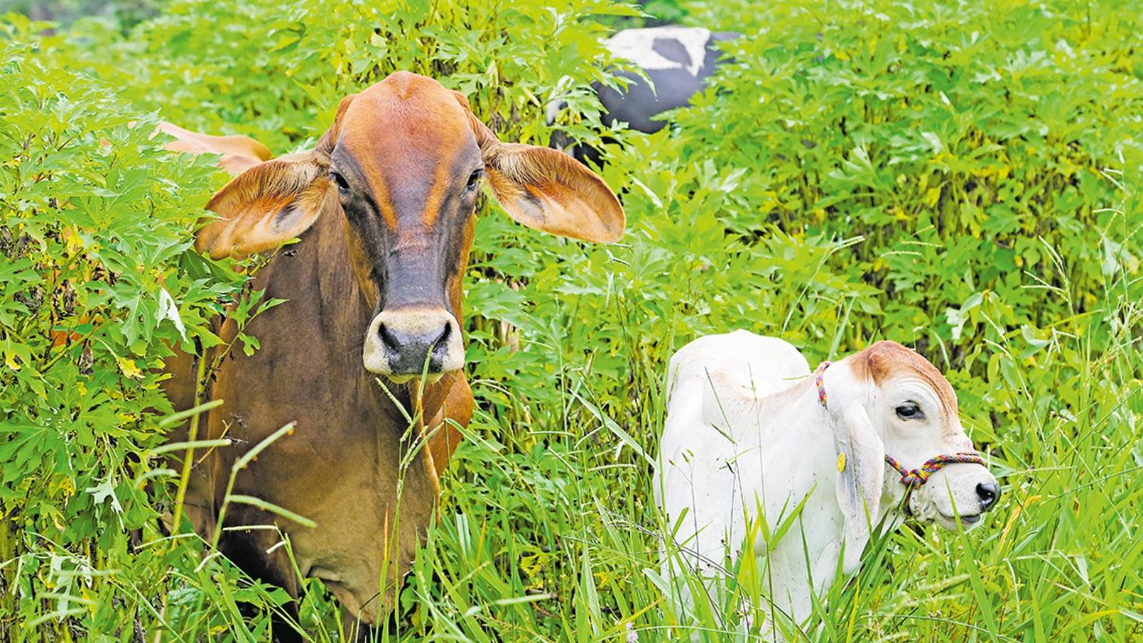 Proteccionismo mala leche