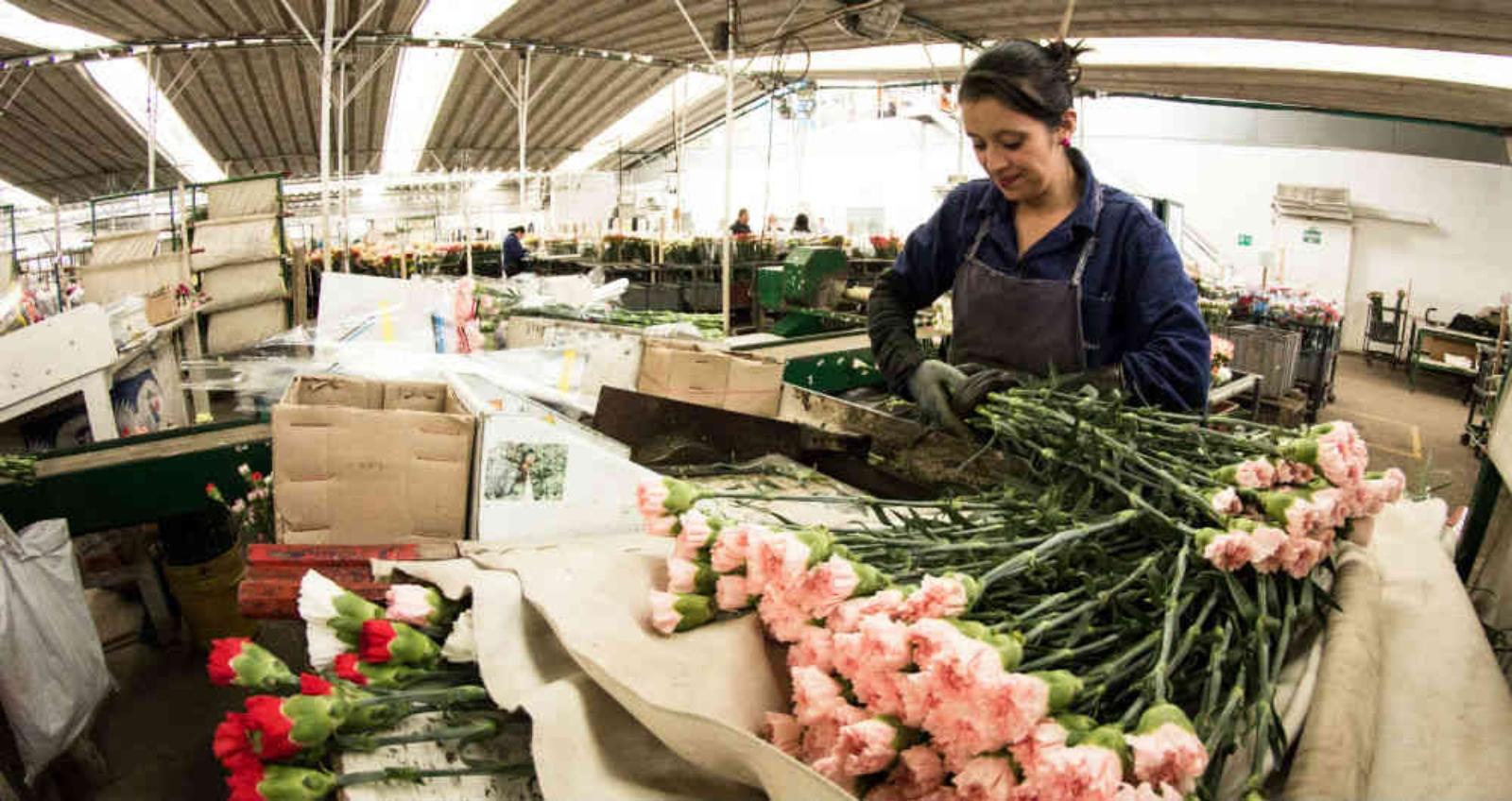 El coronavirus golpea a los floricultores del país