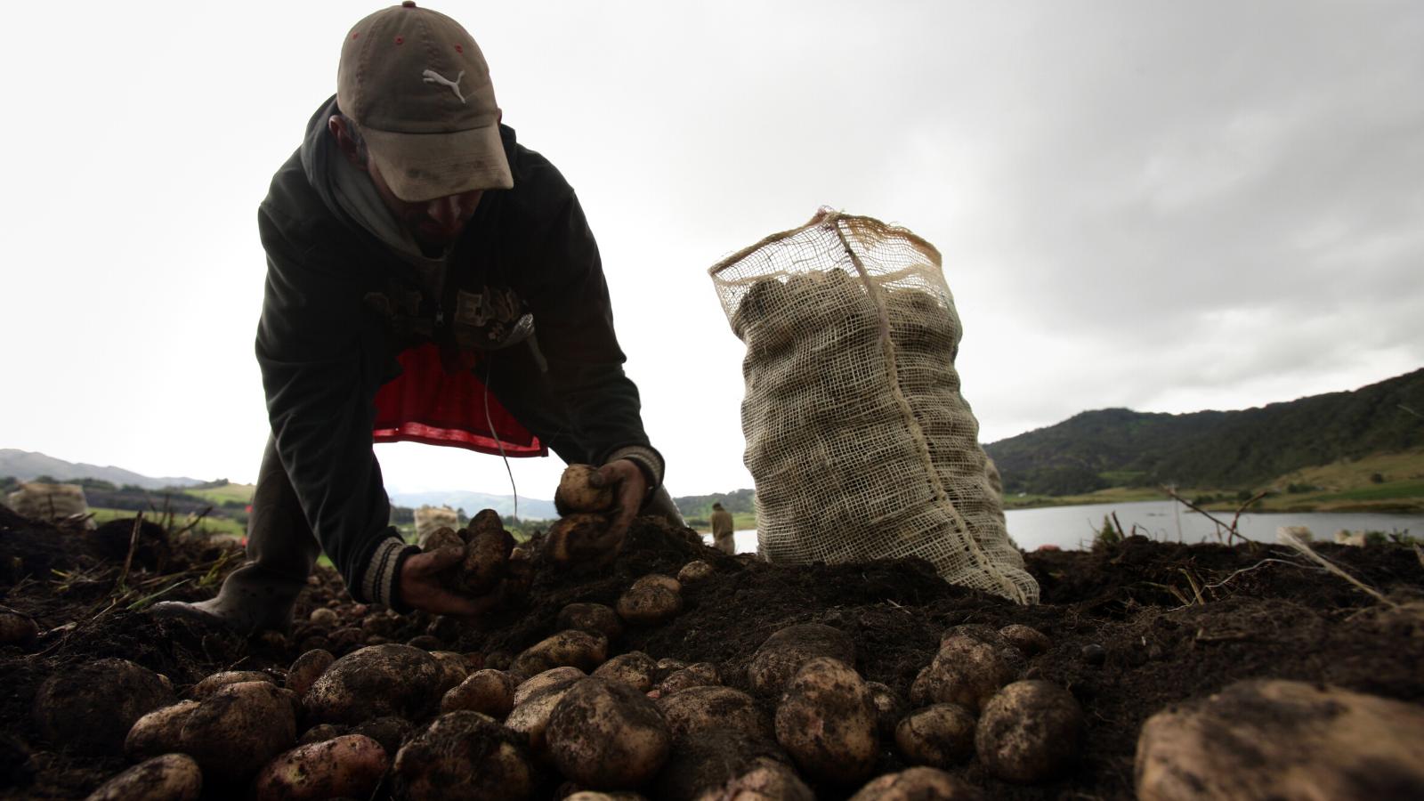 ¿Cuáles son los alimentos que más escasean en las regiones de Colombia?