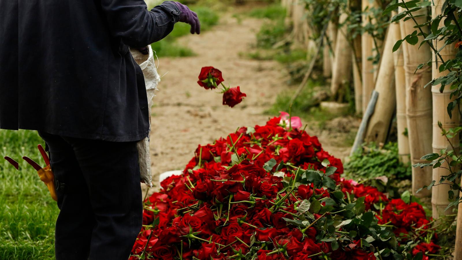 Los floricultores se las arreglan para ponerle color al Día de la Madre