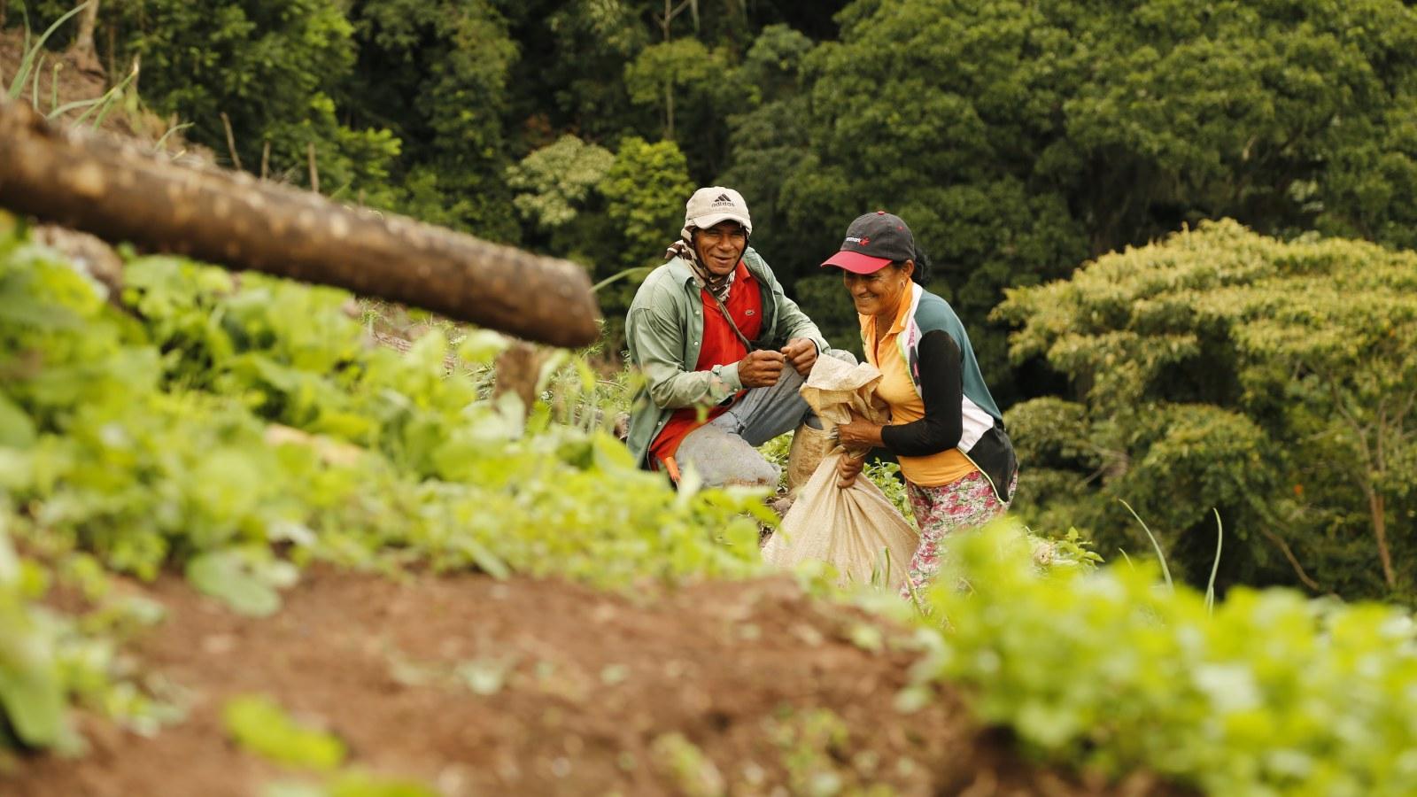 Indígenas del Cauca alistan un gran trueque humanitario