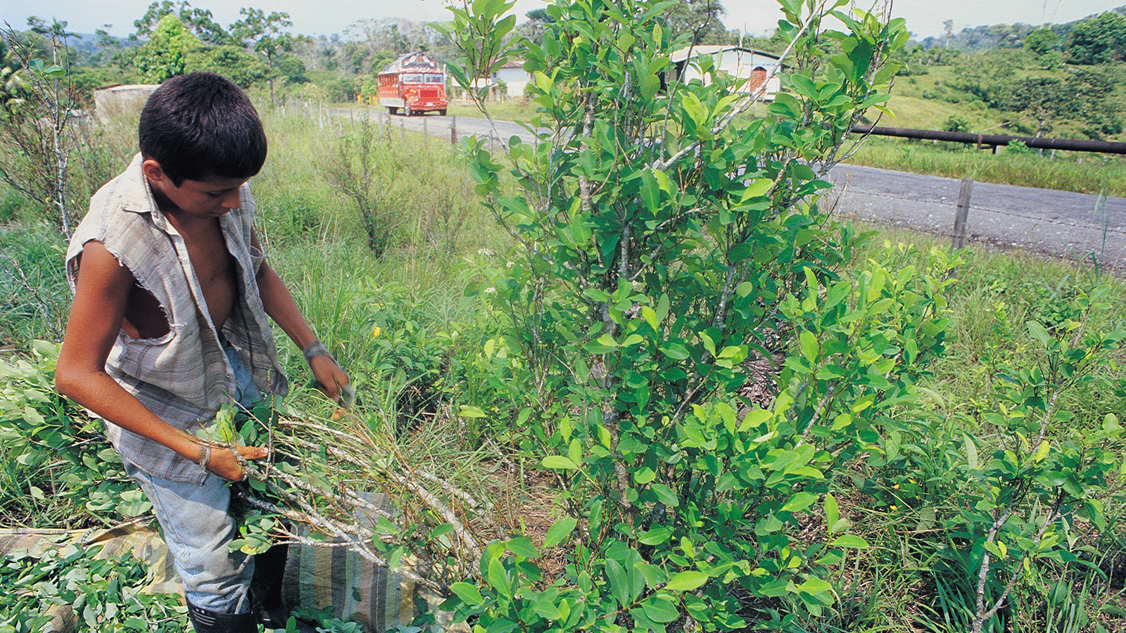 Líderes rurales se manifiestan en contra de la erradicación forzada
