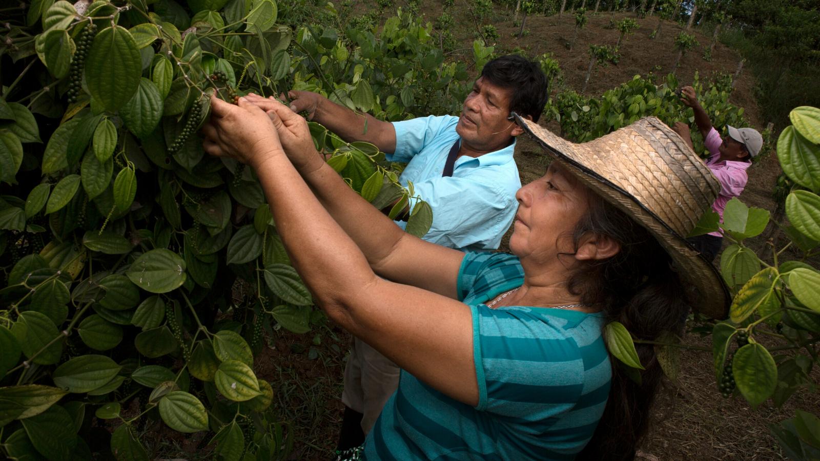 Convocatoria: Se abren inscripciones para proyecto que apoya a las mujeres rurales del Pacífico