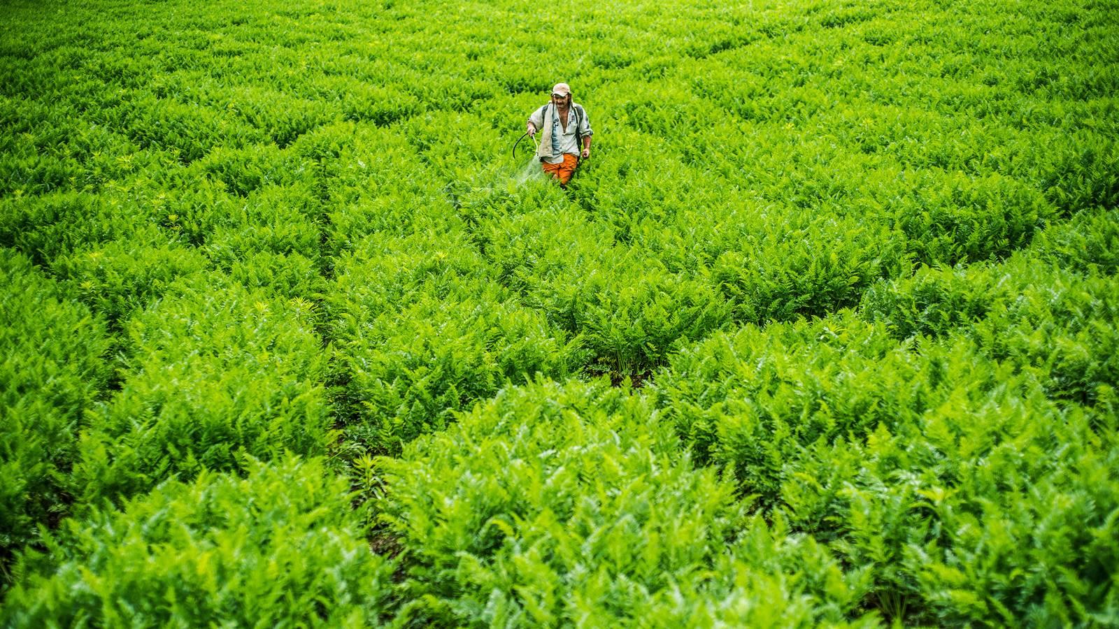 historias//asociarse-una-apuesta-clave-para-salvar-a-los-agricultores-del-pais