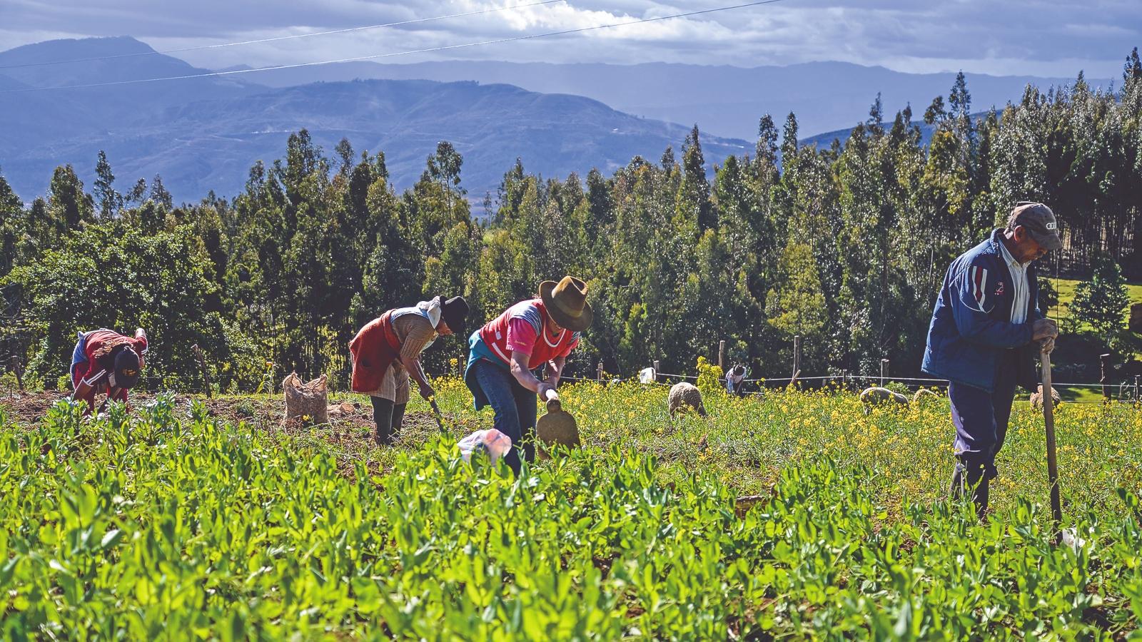 historias//participe-en-la-beca-para-los-productores-rurales-del-pais