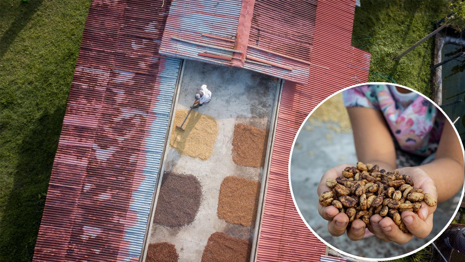 La hacienda cafetera que produce el café más exótico del mundo