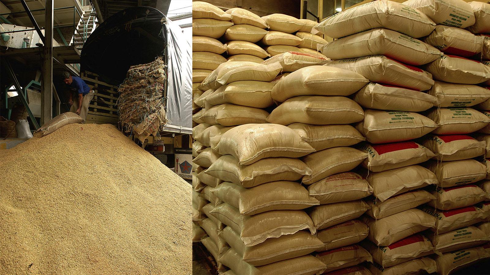 el-primer-arroz-colombiano-con-denominacion-de-origen
