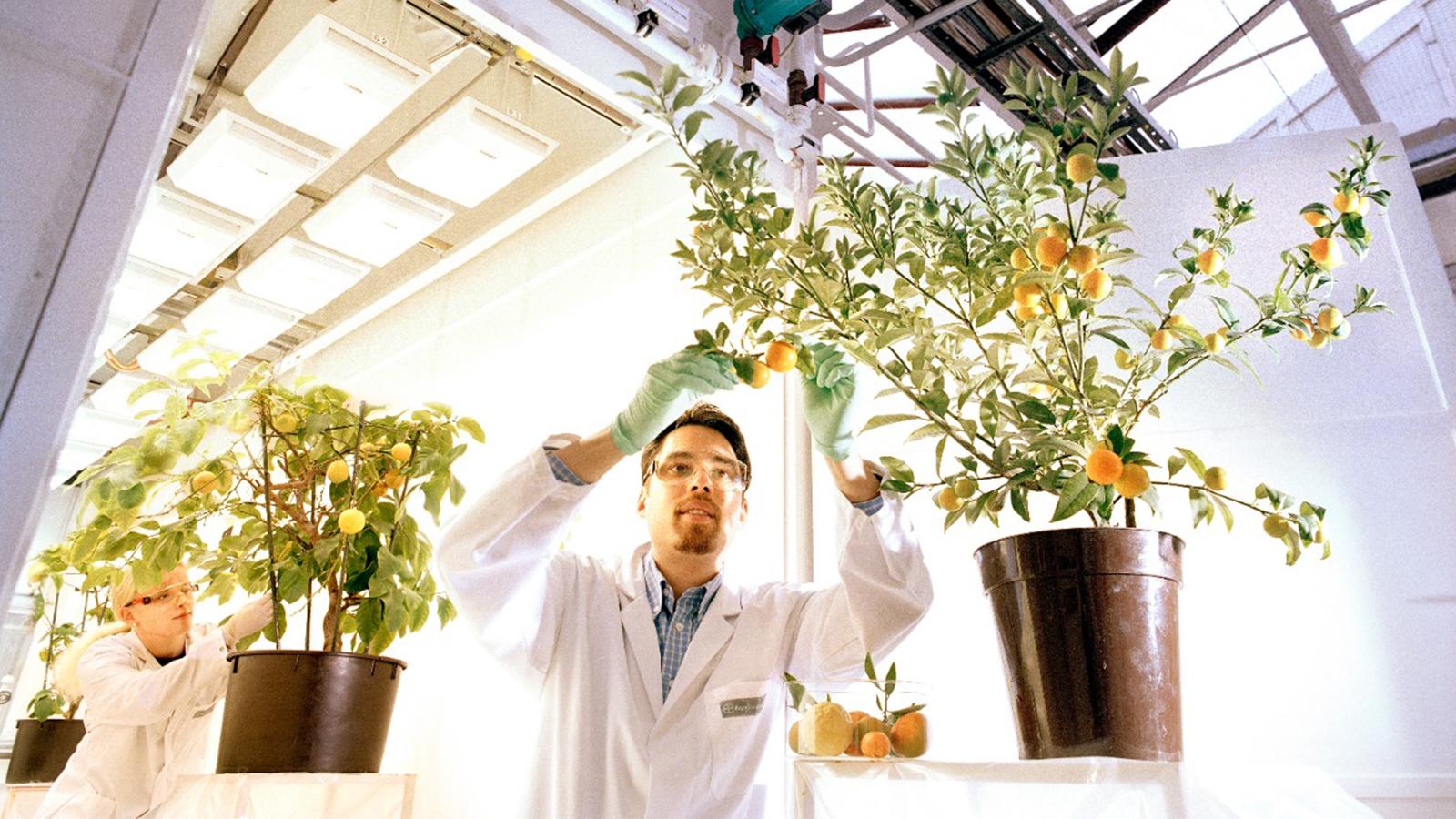 Abren nueva convocatoria para proyectos de innovación agrícola