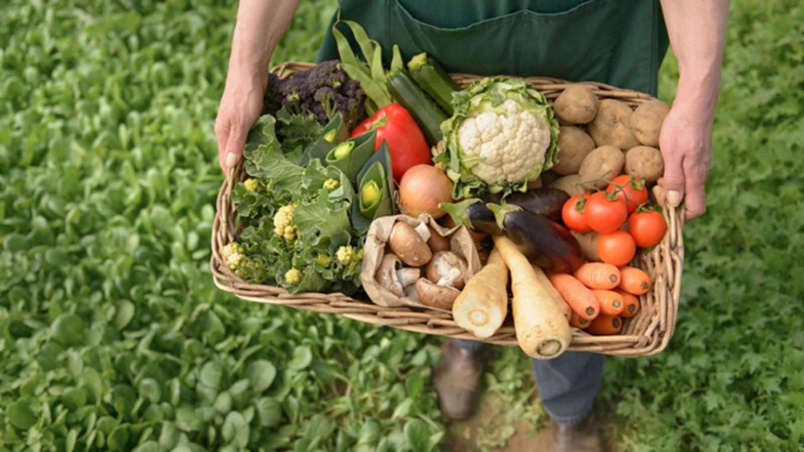 Mercados Campesinos Móviles: una opción para disminuir el desperdicio de alimentos