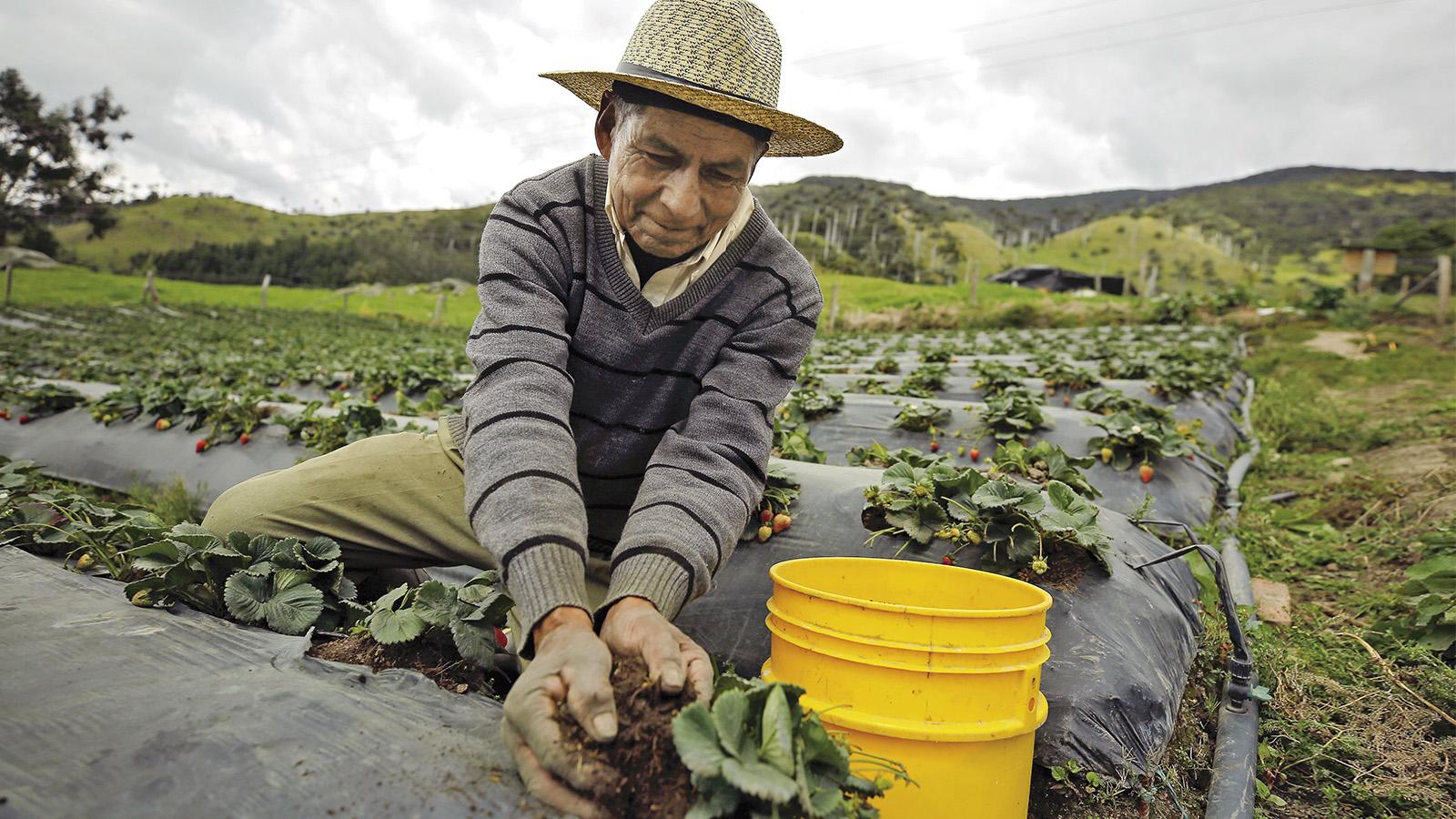 Vuelve la discusión del jornal diario campesino