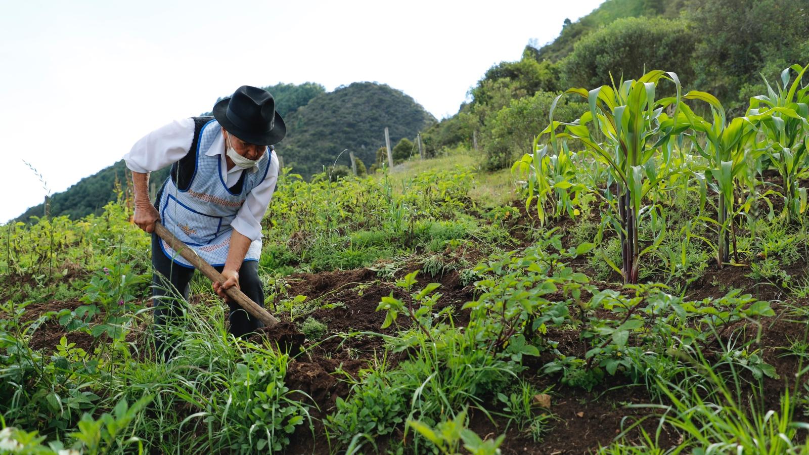 ¿Qué impacto está teniendo la pandemia sobre el empleo rural?