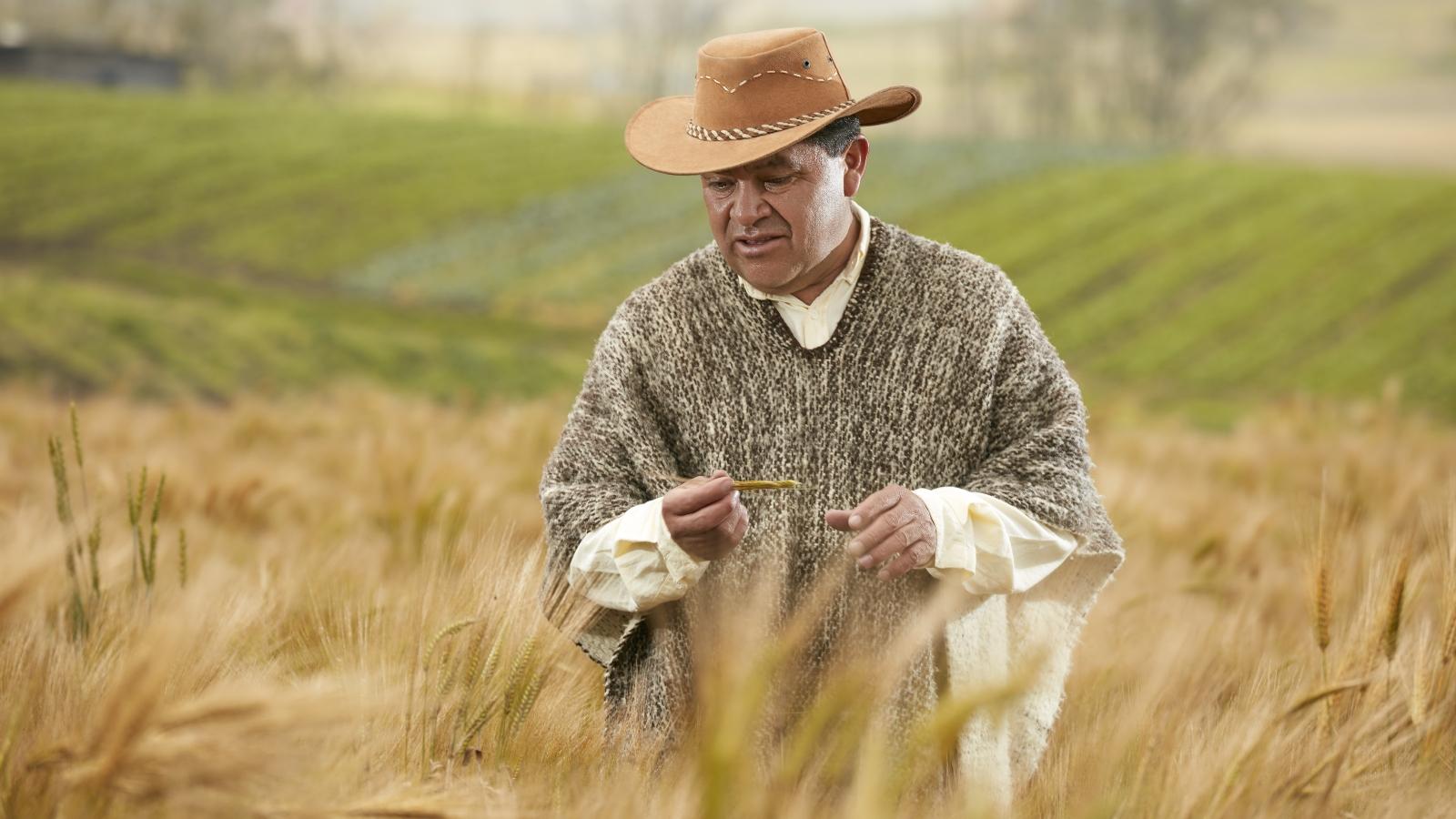 Disminuyó la pobreza en la ruralidad: Dane