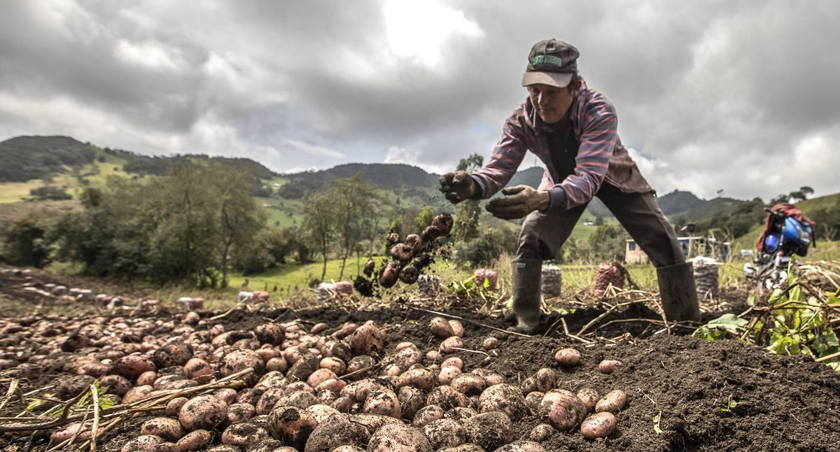 En la ruralidad cayó la pobreza, pero también el ingreso por salario