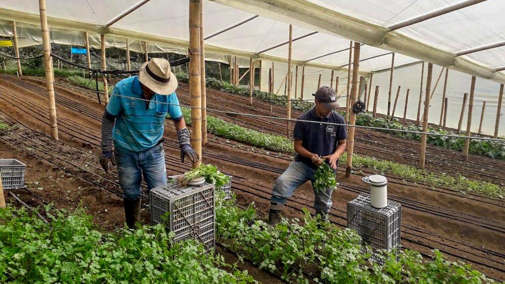 La plataforma digital que ha permitido que decenas de agricultores en el Valle del Cauca no pierdan sus cosechas