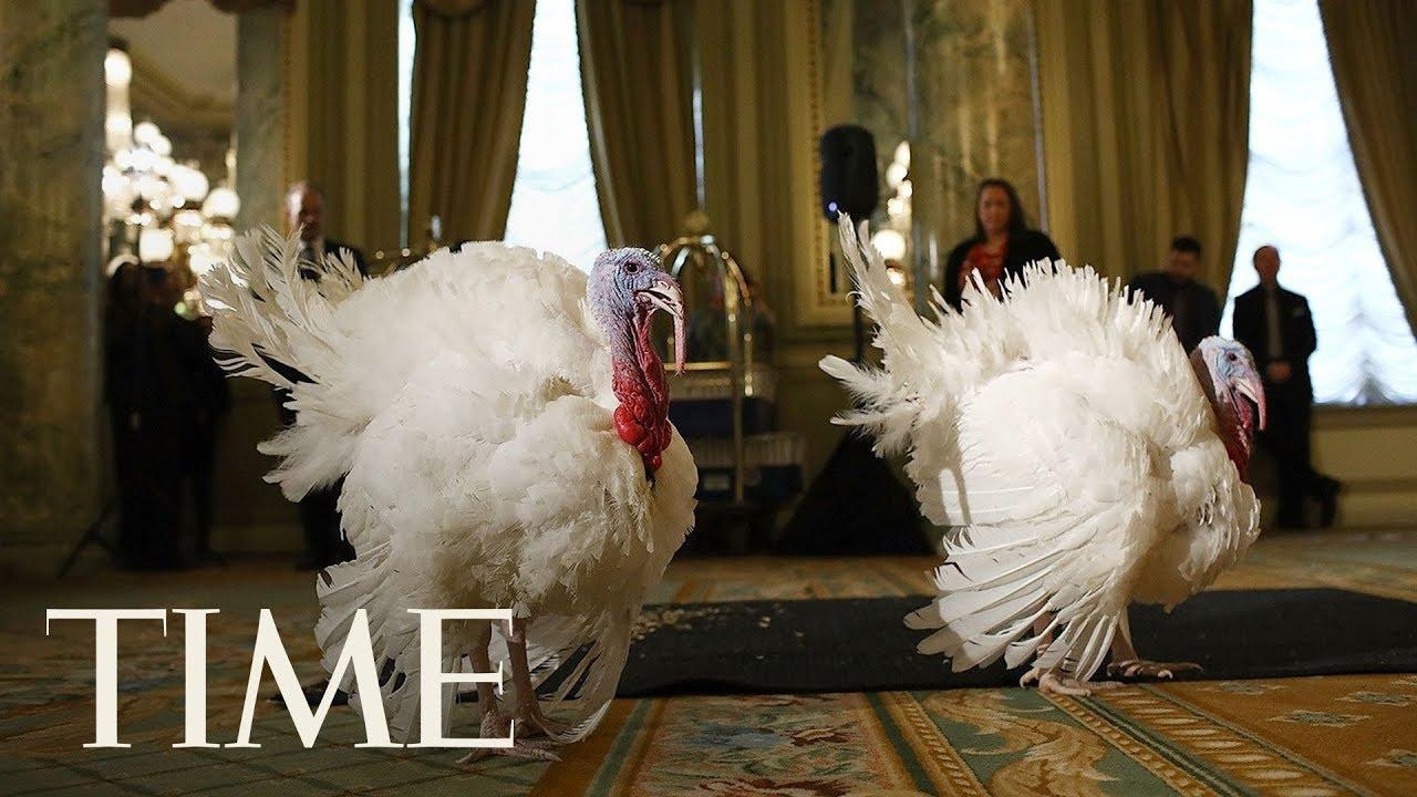 Turkey-Pardon-President-Trump-Pardons-National-Thanksgiving-Turkey-In-Annual-Ritual
