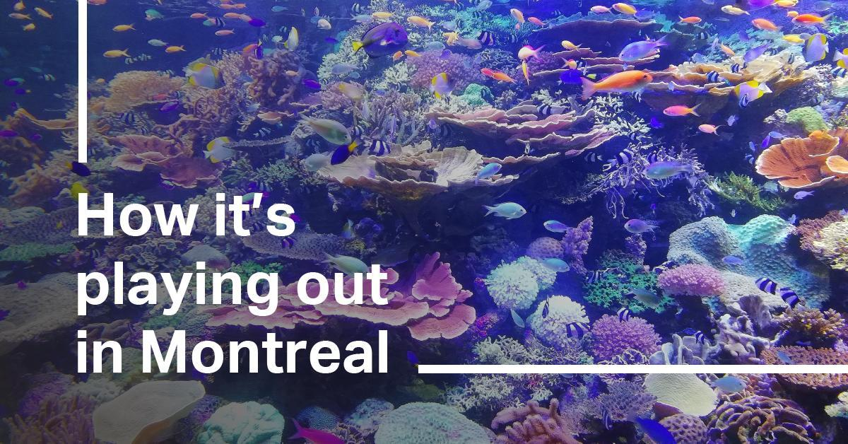 The Montreal ecosystem.