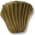 Wavey Fan Shell 16