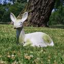 Sitting Deer Fawn