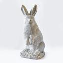 Southern Bunny 20