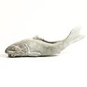 Oriental Catfish No Base