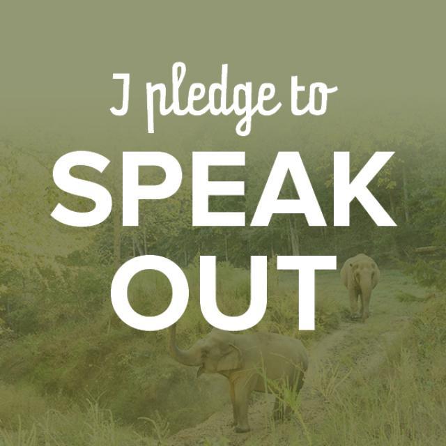 I Pledge To Speak Out