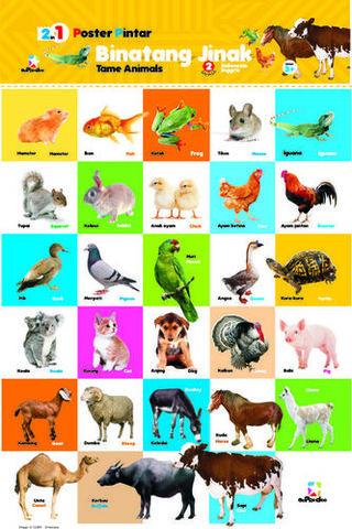 660 Gambar Hewan Dan Penjelasannya Dalam Bahasa Inggris Terbaik