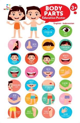 Opredo Education Poster: Body Parts & Body Organs
