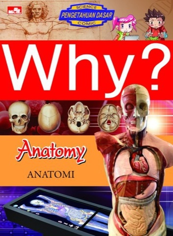Why? Anatomy