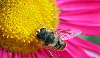 Bee flower 648