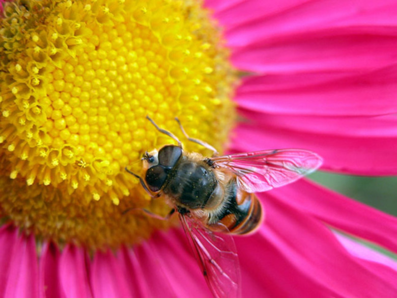 Taking The Sting Out Of Queen Bees