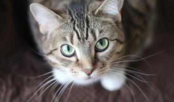 Adorable animal cat 20787