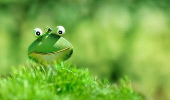 Frog head in grass
