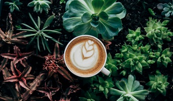Beautiful botanical coffee 374757