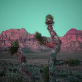 Joshua Tree of Vegas