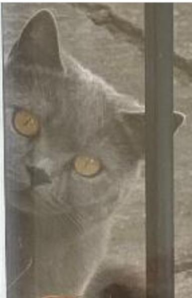cat_53543.png