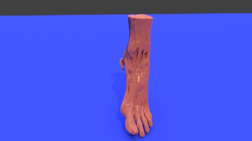 Left foot - Muscle model STL file from converted CT scan