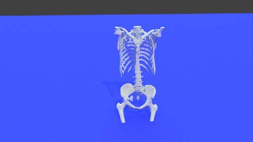 Whole Body - Bone model STL file from converted CT scan