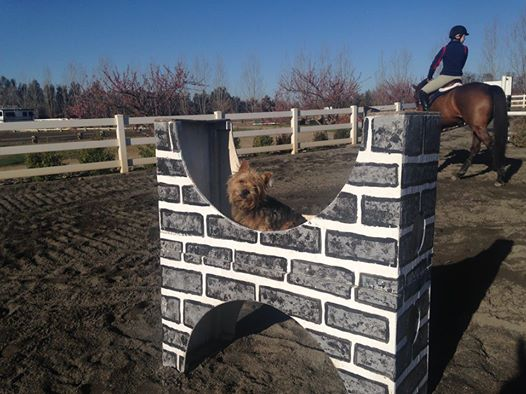 Jen McFall's dog Monty graciously allowed riders to jump his castle and petting station.