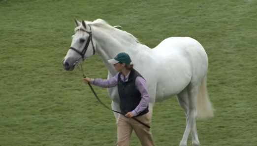 Cruising being honored at the Dublin Horse Show in August 2014.