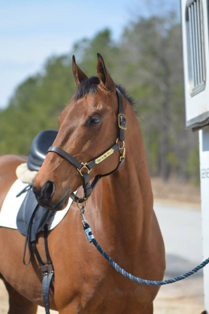 Dressage Lessons in Aiken