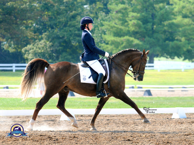 Lauren and Jazz successfully compete against horses over 3 hands taller than him. Photo by Suzanne Fischer.