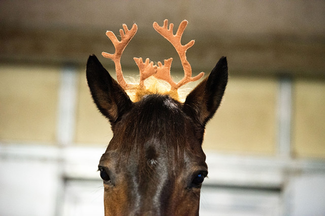 Is that Donner the Reindeer? Read on to find out!