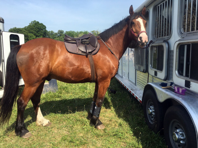County Saddlery at Windy Hollow Hunt hunter pace