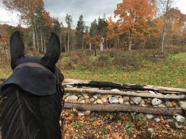 Sky CJMillar82 saddle fitting