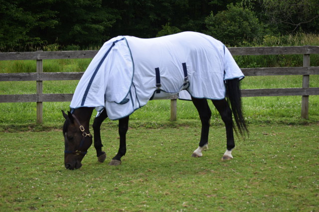 The Insect Shield Technology of the Supa Fly sheet helps to provide Roo with effective and long lasting personal protection from mosquitoes, ticks, flies and fleas. Photo by Lorraine Peachey