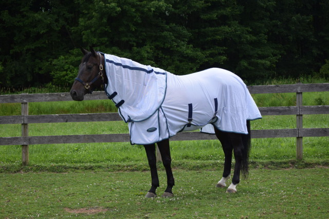 I definitely like that the Supa Fly sheet blocks up to 70% of UV rays. Definitely a plus considering Roo's dark bay coat is prone to bleaching out in the sun. Photo by Lorraine Peachey.