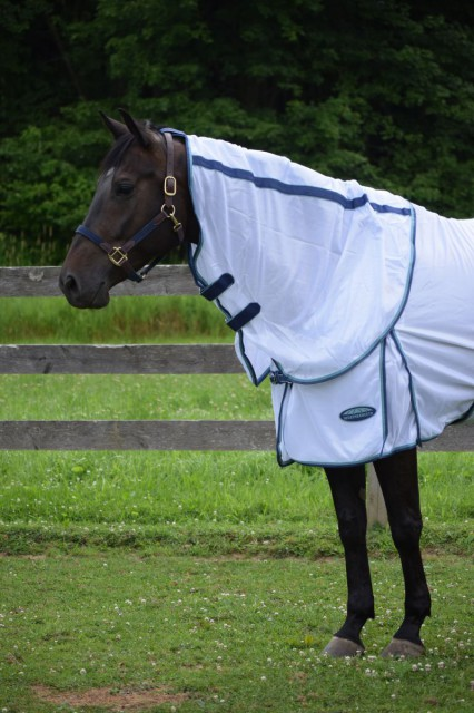 The Supa Fly sheet also features a removable neck cover, which is comfortably loose fitting. It can be easily attached or detached with four velcro loop closures. Plus, I like the velcro loop at the top that I can use to attach the top to a halter to keep it in place. Photo by Lorraine Peachey.