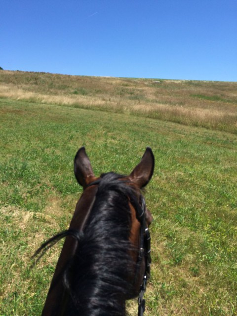 Hacking the new Intermediate horse at home